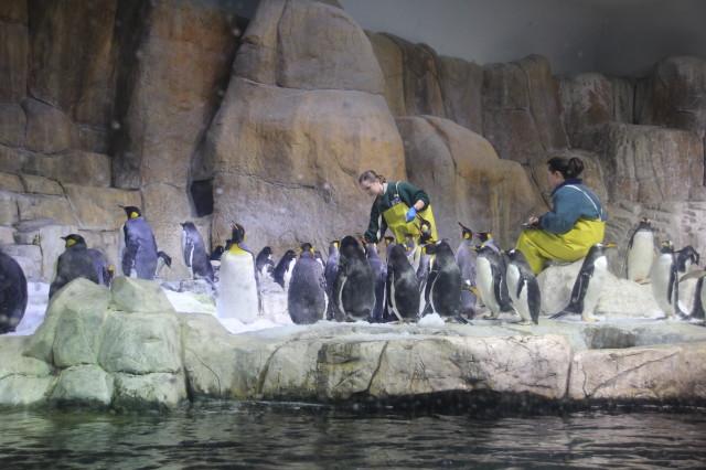 奥马哈的动物园(二)