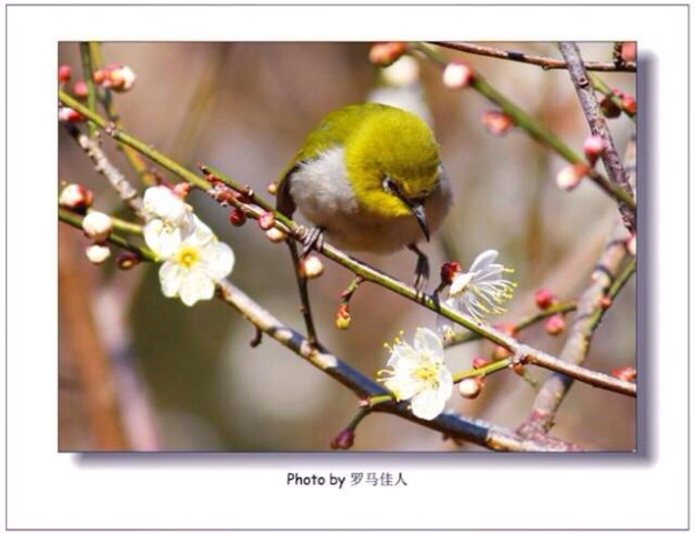 photo32-626x480