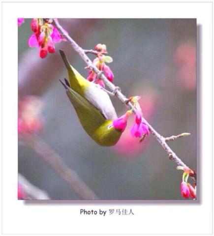 photo8-435x480