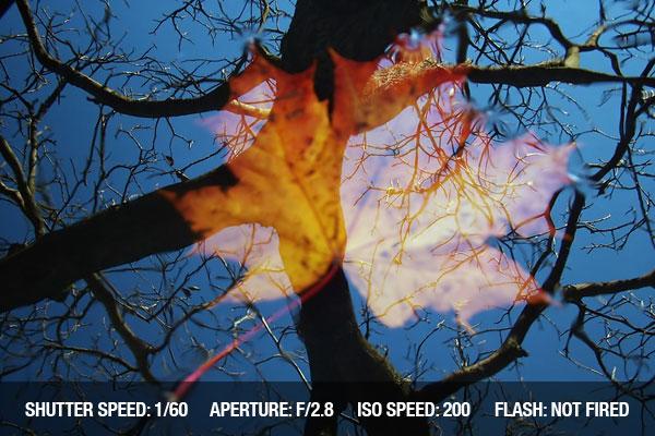 快门速度: 1/60 孔径: F/2.8 ISO: 200 闪光灯: 未用