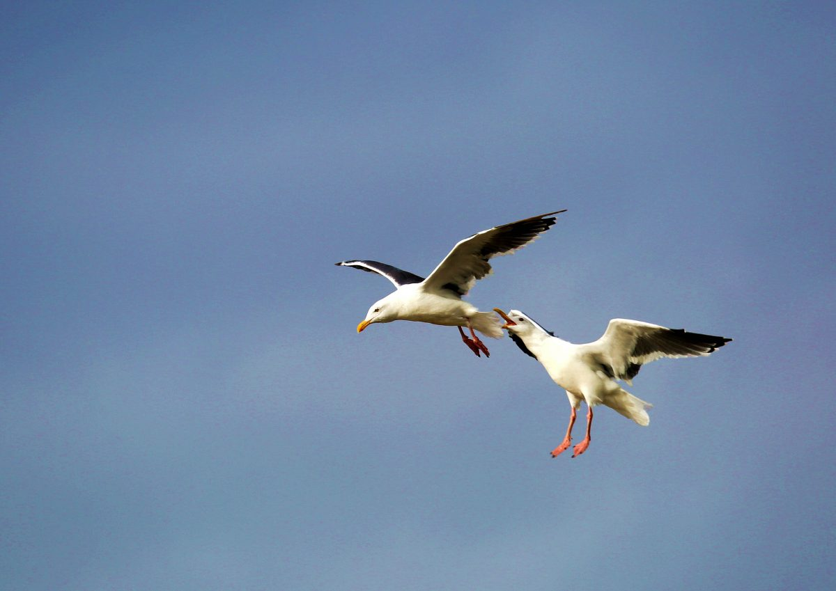 摄影:飞翔于北欧峡湾