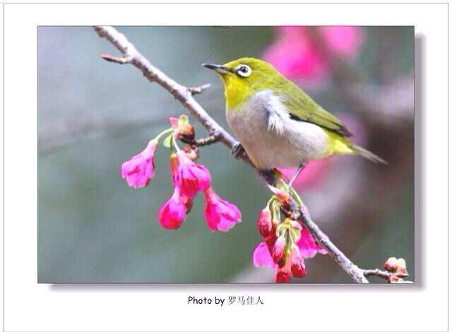 七八级同学照片:花香中鸟语